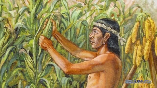 Los Nahuas veneran el maíz por ser divino.