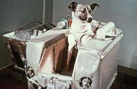 First animal in space by USSR (Laika the dog)
