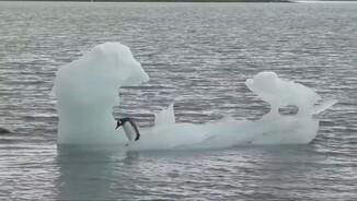 Desgels a L'Àrtic i l'Antàrtida