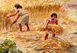 Aparición de la Agricultura