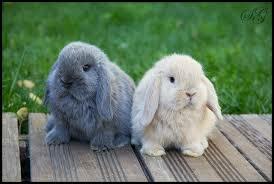 El meu conill!