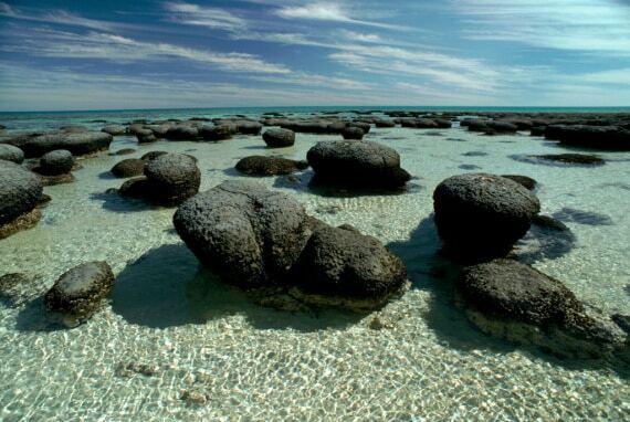 Colonie di batteri chiamate stromatolite