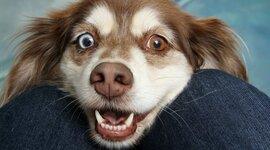 Etapas de la vida de los perritos  timeline