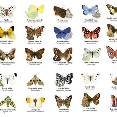 Ο Κύκλος ζωής της πεταλούδας timeline