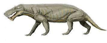 Il gorgonopside