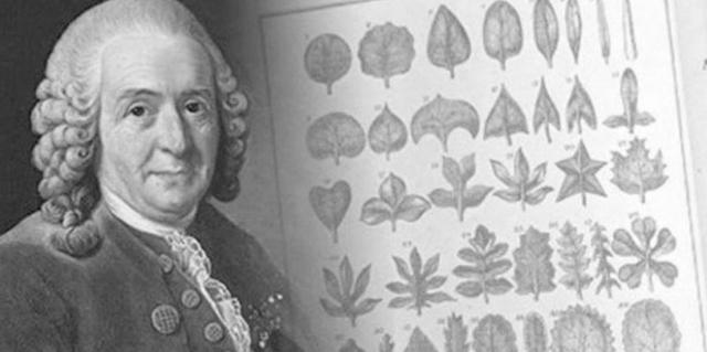 Carl Linneo: 1735