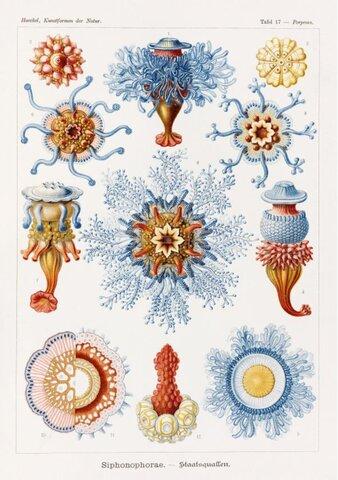 Ernesto Haeckel: 1869