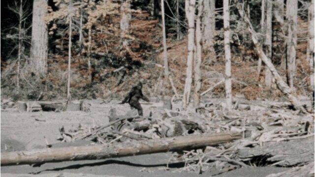 The Bigfoot Walk