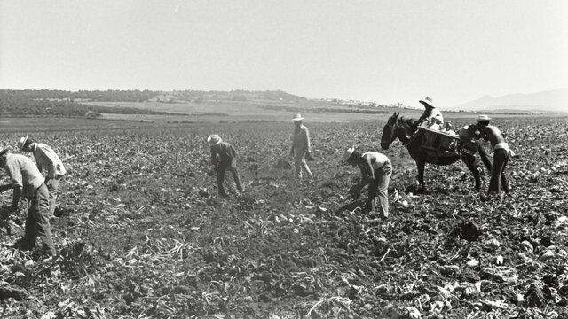 Ley de Bases de la Reforma Agraria