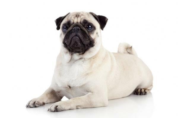 Cuando aprendí a educar un perro (Toby)