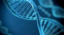 La investigación del ADN  timeline