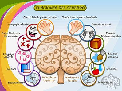 Franz Joseph Gall, planteó que las facultades cerebrales estaban en el cerebro y que se podrían descubrir analizando las protuberancias craneales