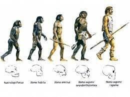 La teoria de l'evolució