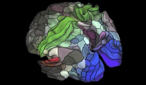 Neuropsicología Dinámica