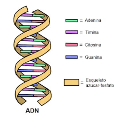 LA HISTORIA Y LA EVOLUCION DE LA GENETICA timeline