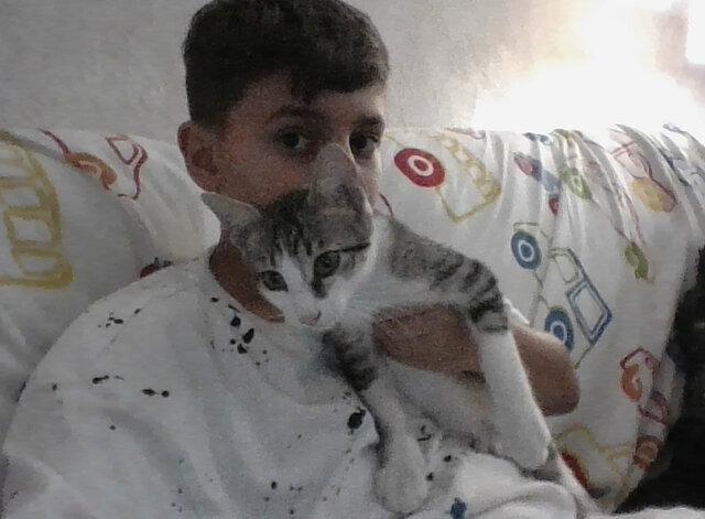 Vaig adoptar el meu gat