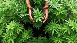 Periodo de la marihuana  timeline