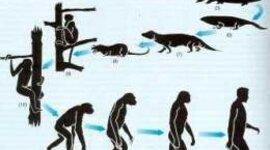 HISTORIA DE LA GENÉTICA  timeline