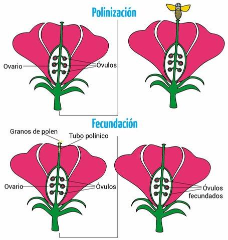 Reproducción Sexual En Las Plantas
