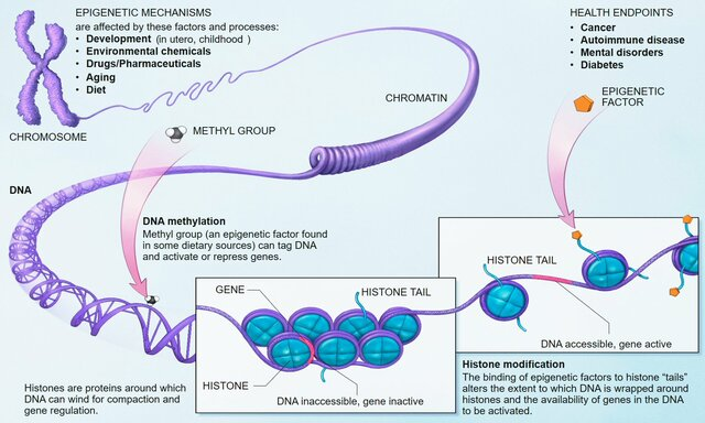 Epigenética relacionada a la obstetricia;