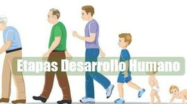 Etapas del desarrollo humano timeline
