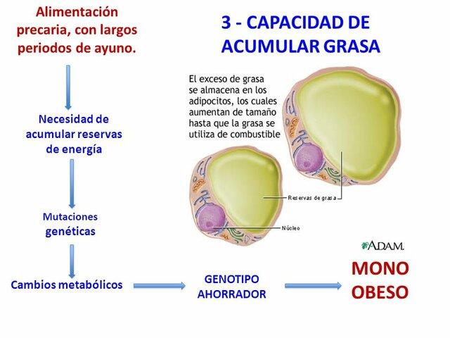 Activación del genotipo ahorrador;