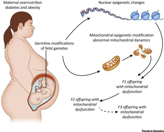 Ciclo biológico de las enfermedades crónicas;