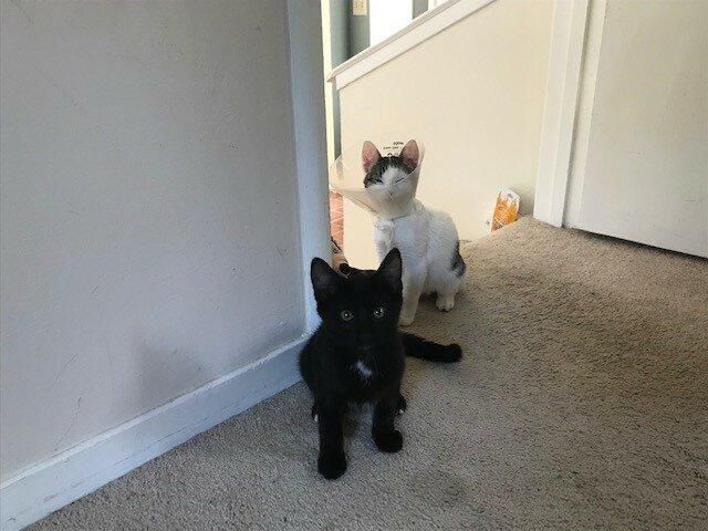 [Personal] Pandemic Kittens