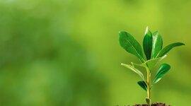 Desarrollo sustentable timeline