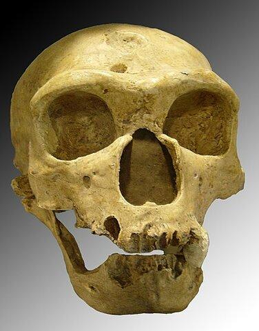 Homme de néandertale