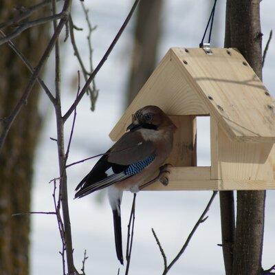 Защита птиц зимой timeline