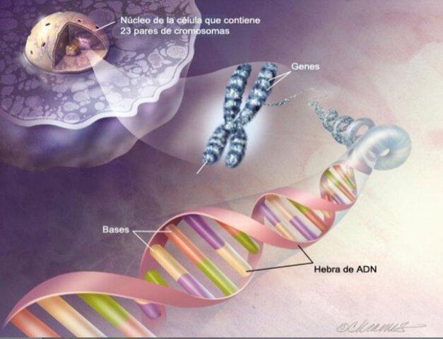 Se aísla el ADN en el núcleo de una celula
