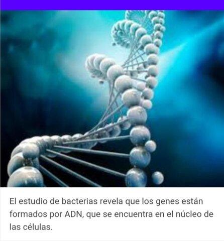 Revela que los genes estan formados por ADN  que se encuentra en el núcleo de las célula