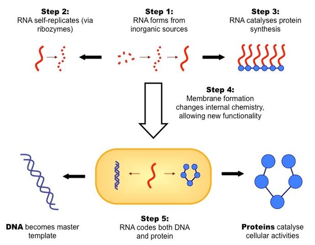 RNA self-replication - Francis Crick 1982 - Whitehead Institute for Biomedical Research - 1995