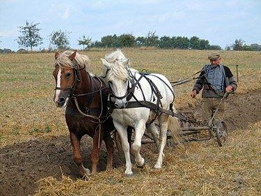 željezni plug s konjskom vučom