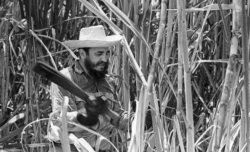 America building sugar canes