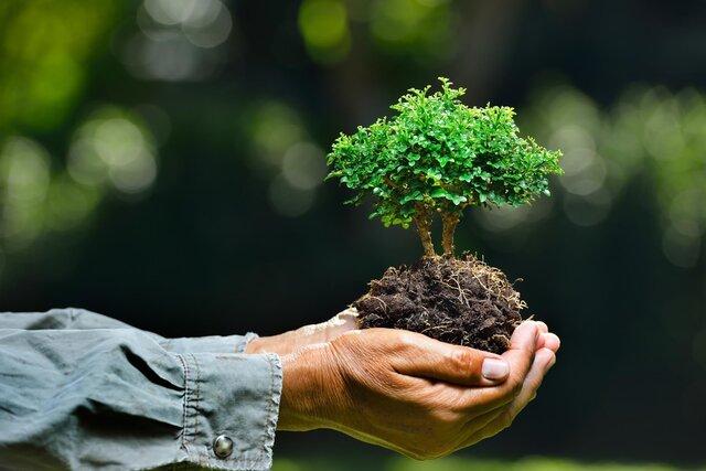 Экология. Этап 2
