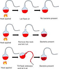 Pasteur - spontaneous generation