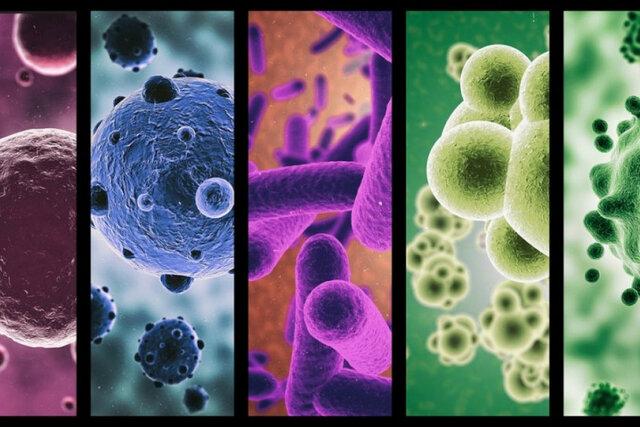 Desarrollo de microbiología y demás ramas.