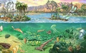 First terrestrial plants (gymnosperms): 21:48
