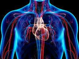 Descripción del Sistema circulatorio pulmonar