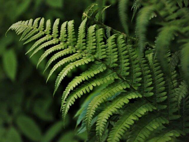 First terrestrial plants (gymnosperms)  21:48
