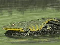 Amphibian age: 22:13