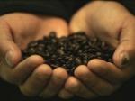 BONANZA CAFETERA