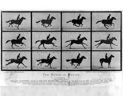 Muybridge Horse Photo