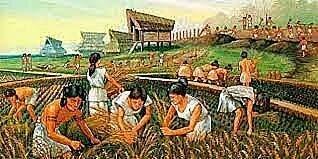 7500 A.C. Descobriment de l'agricultura