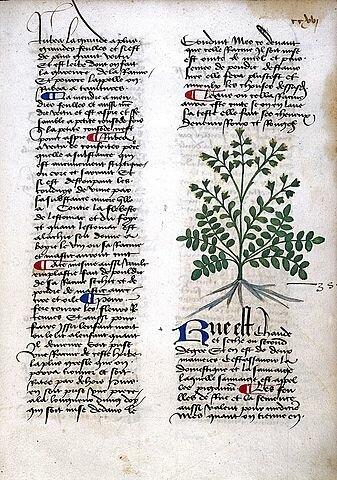 1100 Siglo XI - XII