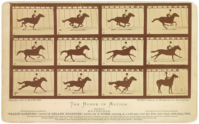 The Motion of a Horse