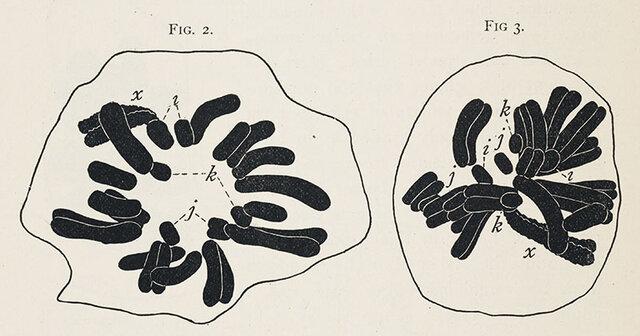 Los genes en el cromosoma