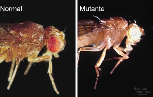 Se descubre el primer mutante